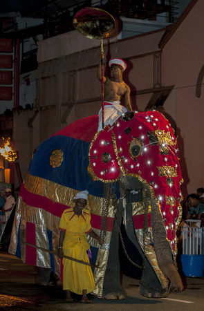 held down: A ceremonial elephant elephant parades down a street in Kandy during the Esala Perahera in Sri Lanka. The Esala Perahera runs every year in late July or early August for ten days, ending on the Nikini poya full moon. The Esala Perahera is held to honour t