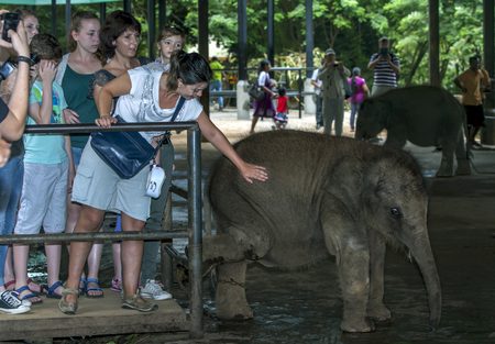 orphanage: A young elephant waits to bottle fed by tourists at the Pinnawela Elephant Orphanage Pinnawala in Sri Lanka. The orphanage was established in 1975 by the Sri Lankan government. Editorial