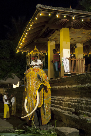 ceremonial: A ceremonial elephant is dressed in costume prior to being lead into the Esala Perahera procession in Kandy in Sri Lanka. The Esala Perahera runs every year in late July or early August for ten days, ending on the Nikini poya full moon and is held to hono