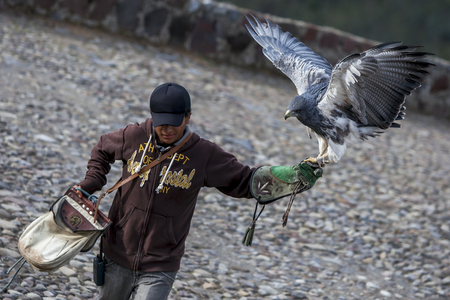 handler: A Black-chested Buzzard eagle lands on the gloved hand of a bird handler at Condor Park in Otavolo in Ecuador.