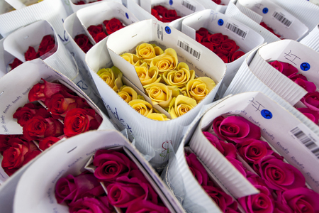 la compania: Roses at the Hacienda La Compania Roses Plantation in Ecuador packed ready for worldwide export. The major market for these roses is the USA.
