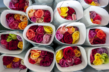 la compania: Roses packed ready for export at the Hacienda La Compania Roses Plantation near Cayambe in Ecuador. The major market for these roses is the USA.