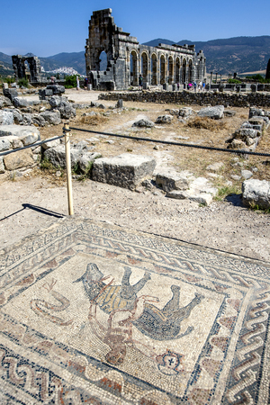 volubilis: A mosaic and the ruins of the Basilica at Volubilis, the ancient capital of the Roman province of Mauritania in modern day Morocco.