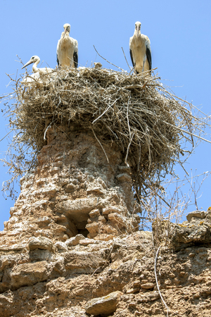 existed: A stork nest sits atop ruins at the medieval fortified site of Chellah. Located south of Rabat in Morocco, Chellah has existed since pre-Christian times. Stock Photo