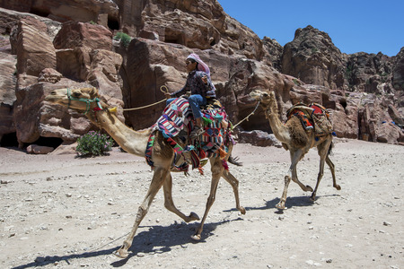 nabataeans: A Bedouin boy rides a pair of camels at Petra in Jordan. Petra was possibly established  as early as 312 BC as the capital city of the Arab Nabataeans.