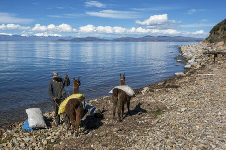 man in the moon: A Bolivian man loads sacks onto his pair of llamas on the edge of Moon Island on Lake Titicaca in Bolivia.