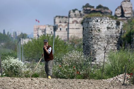market gardener: A market gardener tends to his plants in the Yedikule district of Istanbul in Turkey. In the background stands a section of the great city wall which surrounded the ancient city of Constantonople. Editorial