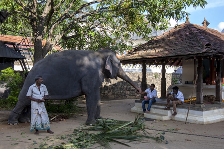 mahout: A ceremonial elephant stands with its mahout beside a small temple within the Temple of the Sacred Tooth Relic complex in Kandy in Sri Lanka . As evening approaches the elephant will then be dressed and parade in the Esala Perahera through the streets of