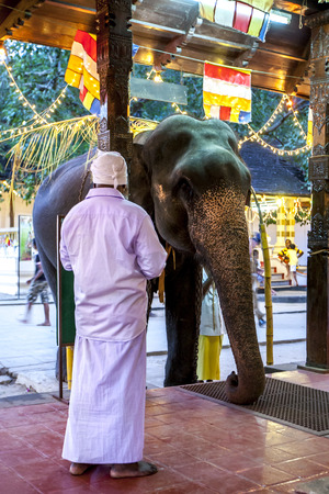 sri lanka temple: A ceremonial elephant waits to be blessed at the entrance to a temple within the Temple of the Sacred Tooth Relic complex in Kandy in Sri Lanka . The elephant will then be dressed to parade in the Esala Perahera. Editorial