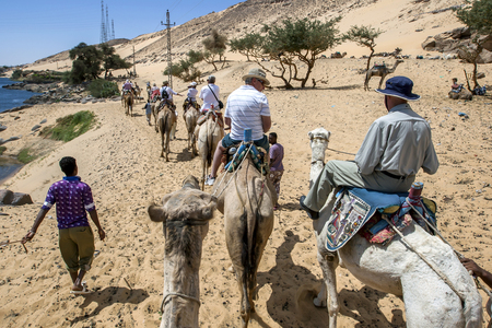 west bank: A camel train with tourists aboad head along the west bank of the River Nile towards the Nubian village of Garb-Sohel in the Aswan region of Egypt.