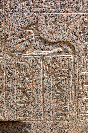 egypt anubis: An engraved relief of the canine god Anubis (the god of funerals and death) with hioglyphs on a granite stone at the ancient capital of Memphis in northern Egypt.