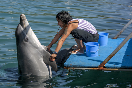 interacts: A trainer interacts with one of the dolphins she cares for in the harbour at Kas in Turkey. Kas lies on the Turkish Mediterranean coast. Editorial