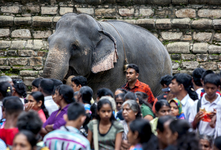 A ceremonial elephant stands amongst a crowd of hundreds of people outside the Temple of the Sacred Tooth Relic at Kandy in Sri Lanka prior to the start of the Esala Perahera (Great Procession). 에디토리얼