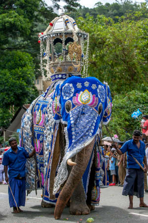A ceremonial elephant dressed in a blue cloak is lead by mahouts past a crowd during the Day Perahera, the final parade of the Buddhist Esala Perahera festival at Kandy in Sri Lanka.