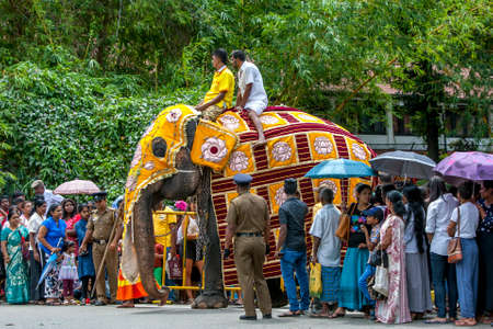 A ceremonial elephant dressed in a yellow cloak walks through a crowd before the start of the Day Perahera, the final parade of the Buddhist Esala Perahera festival at Kandy in Sri Lanka. Editorial