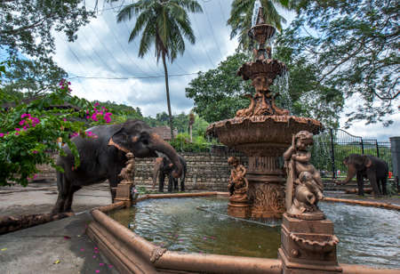A ceremonial elephant drinks from a water fountain adjacent to the Temple of the Sacred Tooth Relic. The elephants are in Kandy, Sri Lanka to parade in the Buddhist Esala Perahera.