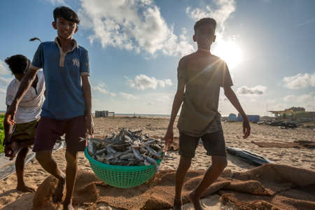 Boys transferring dried sardine fish in a plastic container from Negombo beach in Sri Lanka to be packed ready for sale.