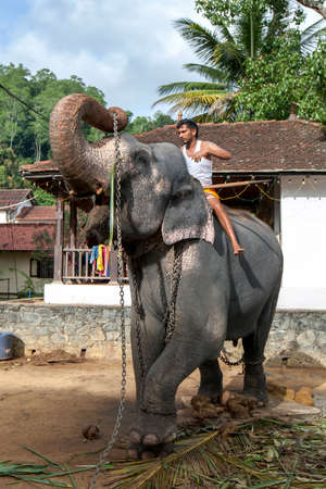 A ceremonial elephant lifts its tethering chains towards a mahout mounted on its back within the Temple of the Sacred Tooth Relic at Kandy in Sri Lanka.