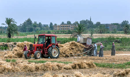 Farmers connect a drive belt from a tractor to a grain thrasher in an agricultural field at Luxor in Egypt.