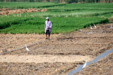 A man walks through irrigated agricultural fields adjacent to the Nile River at Luxor in Egypt.