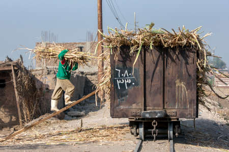 A man walks up a plank to load sugar cane into a railway wagon at Luxor in Egypt.
