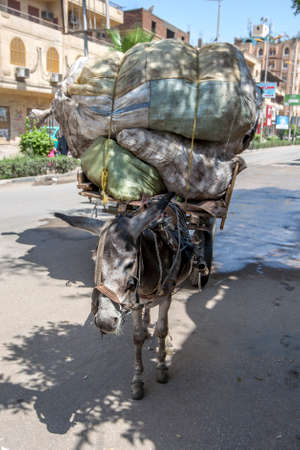 A donkey pulling a cart loaded with sacks rests on a road at Luxor in Egypt. Foto de archivo