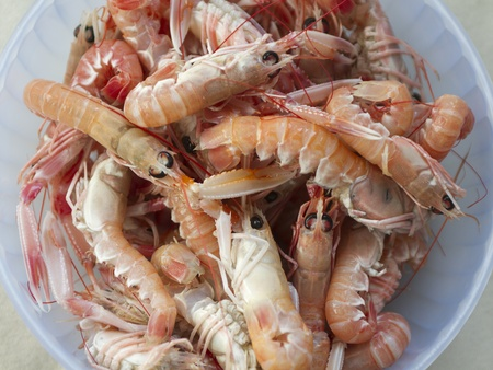 Bunch of fresh Adriatic scampi