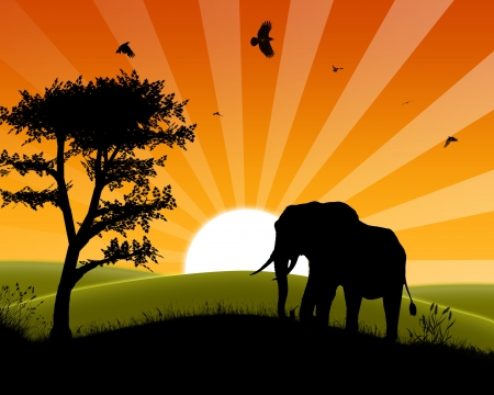 Africa Sunset - Silhouette of Elephant Standing in the Sunset and approaching three