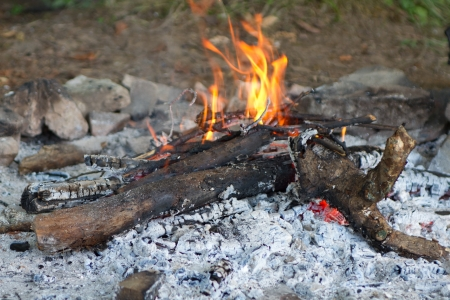 ember: a camp fire in a fire pit at a campsite