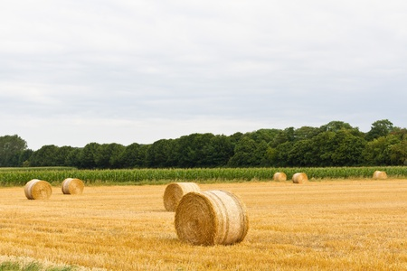 Bales of hay on big field with cloudy sky Stock Photo