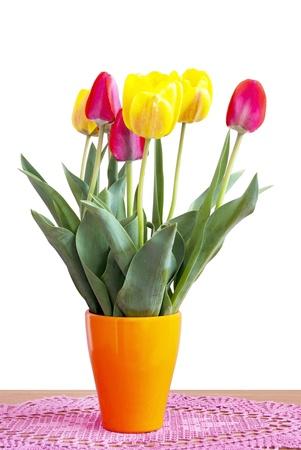 stock photo   tulip:  Tulips isolated on whiteTulips isolated on white Stock Photo