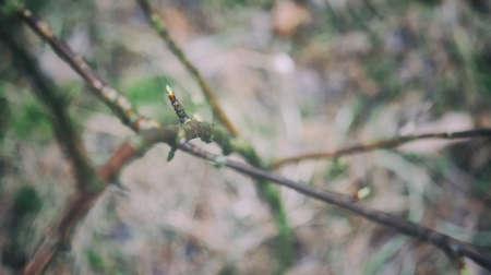 nautral: Tree branch closeup Stock Photo