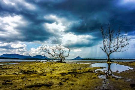 mangrove: mangrove alone
