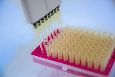 micropipette: Scientist working with multichannel pipette.