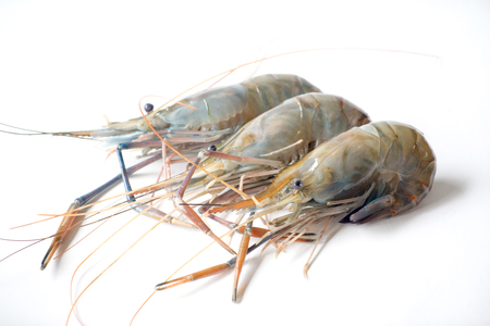 macrobrachium: Raw shrimp, Giant freshwater prawn, Fresh shrimp  on white background