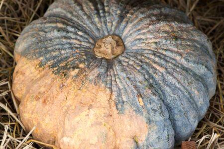 chaff: pumpkin on chaff basket