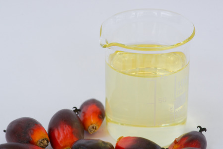 Fesh palm oil seed on white background Imagens