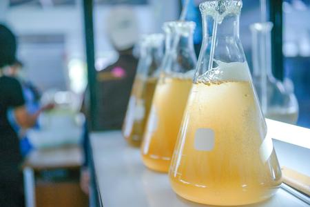 plancton: Cultivo de pláncton marino en laboratorio de vidrio. Foto de archivo