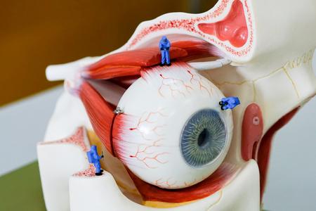 Miniature scientist work at the Human eye nodel Stock Photo