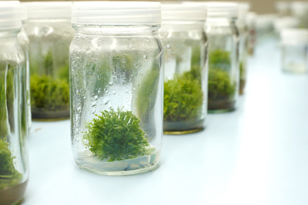 Plant Tissue Culture Stock Photos And Images - 123RF