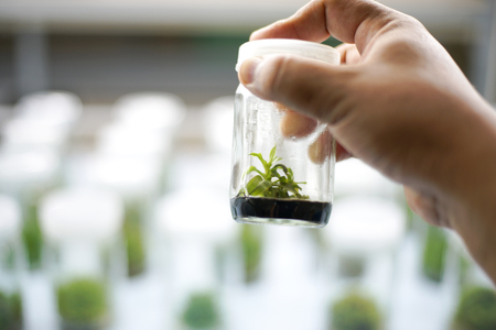 Orchid cell plant tissue culture in the laboratory Stock Photo