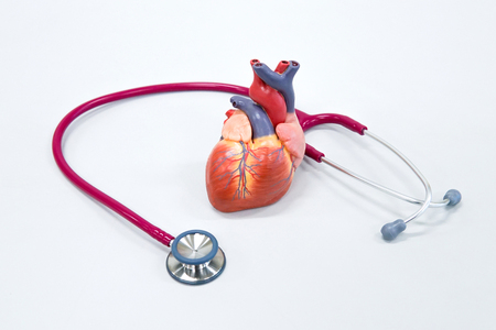 Healthy concept : Human heart model with stethoscope