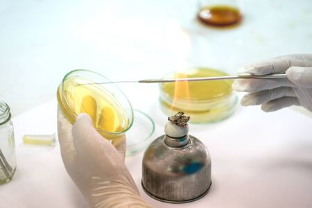 Medical technicians working on bacteria culture of pathogens in laboratory research, Microbiology.