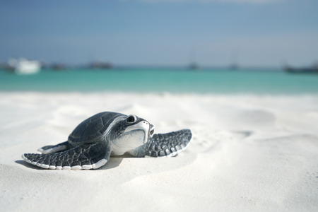 Little sea turtle on the sandy beach 스톡 콘텐츠