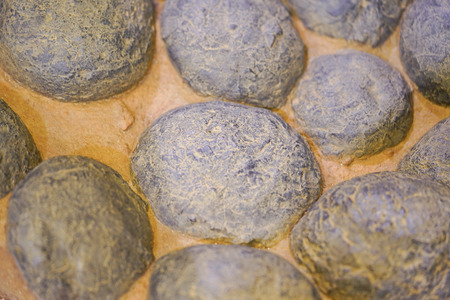 Fossil of the dinosaur eggs. Stock Photo