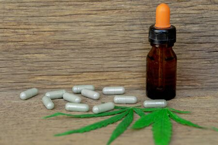 Cannabis(Drugs) marijuana leaf with capsule pill and cannabis oil extract for healthy in medicine. Alternative medicine, Medical cannabis.