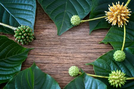 Mitragyna speciosa or kratom leaves is drug from plant. It is a medicinal plant and is addictive.