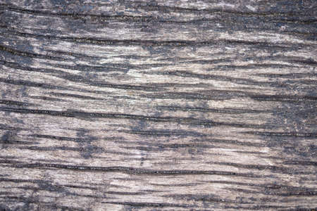 Old bark wood texture. Natural wooden background or cutting board.