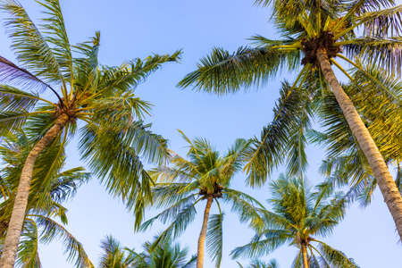 Coconut palm trees perspective view. Peaceful nature serene view on the beach