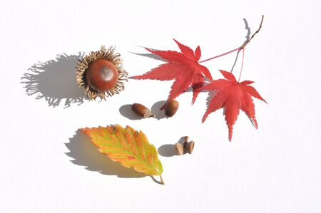 acorns and autumnal leaves photo